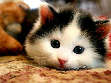 Unduh 92+  Gambar Kucing Imut Banget Paling Bagus HD