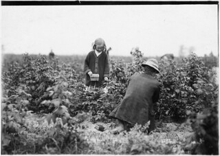 Bertha Brandt, 9 years old. Picks berries on a Rock Creek farm, June 1909