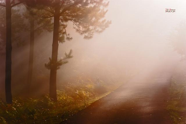 Sombra, luz y niebla