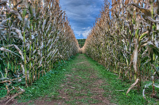 New River Corn Maze | by Photomatt28