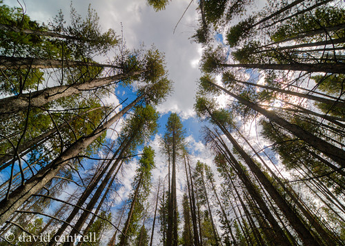 trees sky nature forest nikon wideangle bluesky hdr d300 111628 tokinaaf1116mmf28atx116prodx 20120803496567enhancerc1800