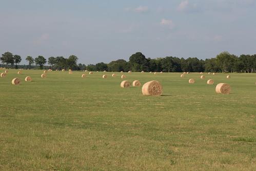 aiken hopelandgardens montmorenci southcarolina field hay