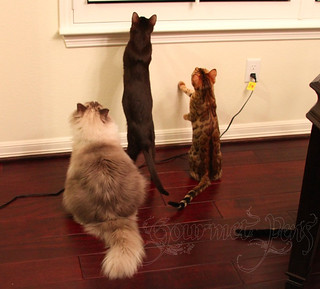 Cats Looking Outside | by GourmetPens