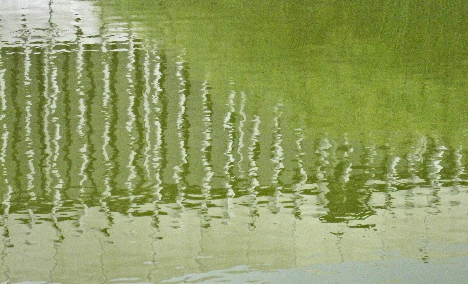 estanque 04