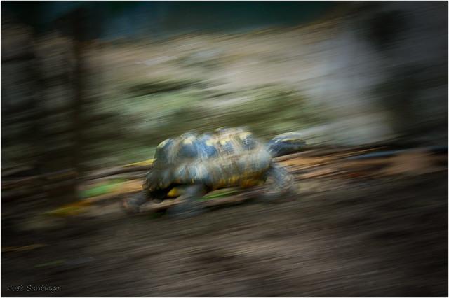 + Tortuga - Turtle
