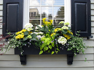 Black window box with black shutters, Tradd Street, Charleston, SC | by Spencer Means