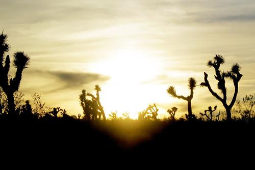 california sunset usa joshuatree canonpowershots100