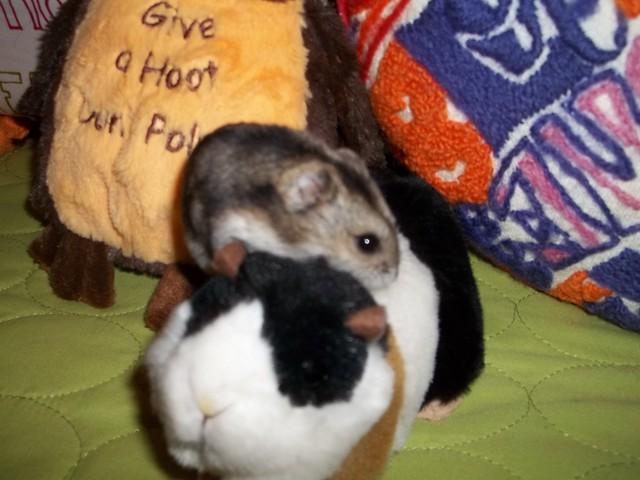 Daphne Makes A New Friend