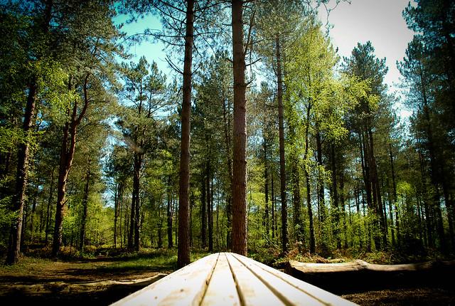 Creech Woods