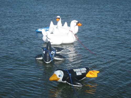 The swans are pretty comfy to float on.