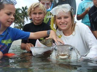 Some cool burrfish!