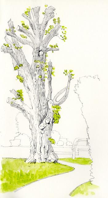 Tree at Cheltenham College