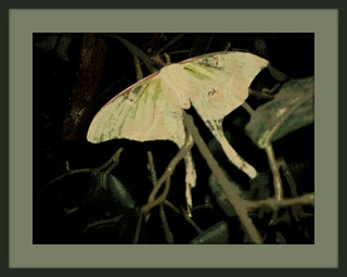 Butterfly editing ..