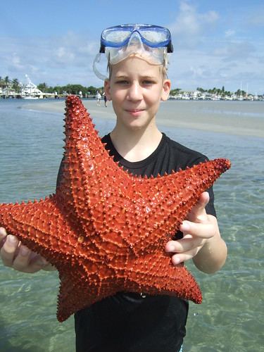 Jakob with a Cushion starfish.