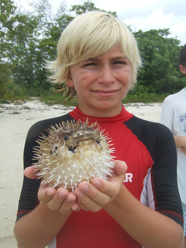 Connor catches a long-spined burrfish! | by AdventureMIke.com