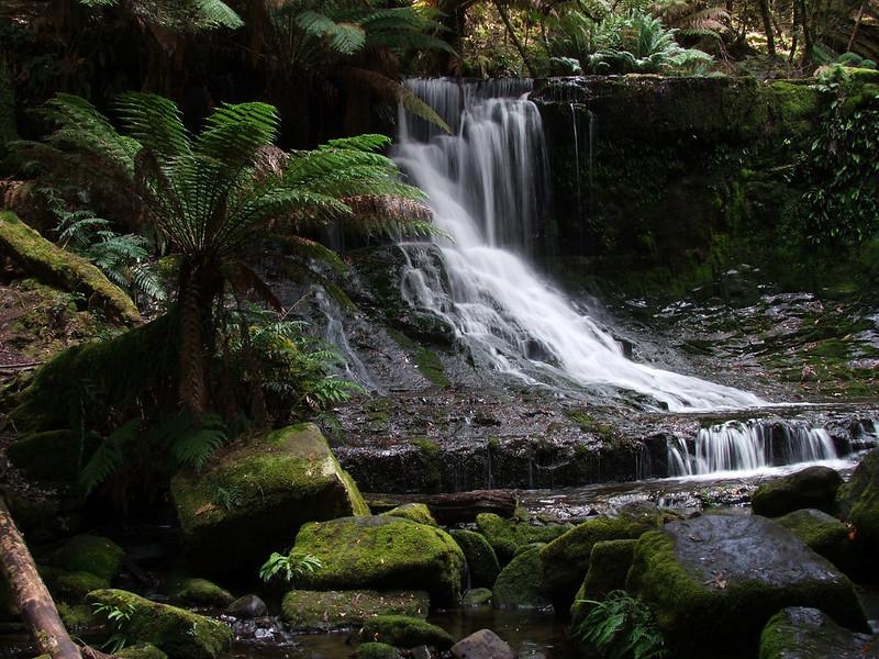 Forest Falls, Tasmania 631