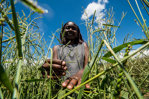 Forages in Rwanda   by CIAT International Center for Tropical Agriculture