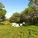 Runge Texas Clover Field