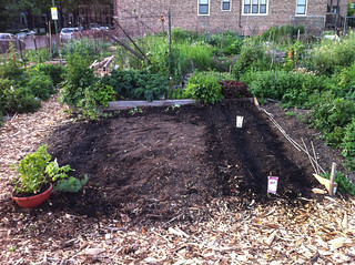 5/18: finally some plantings