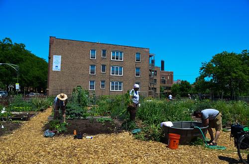 6/9: garden work day