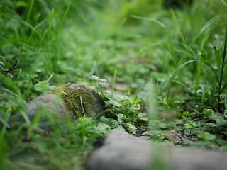 stones overgrown on the path | by Keithius