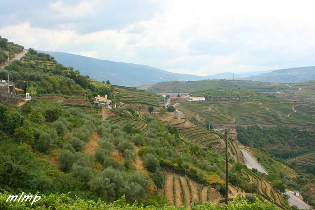 viticole porto 08 15 - Copie