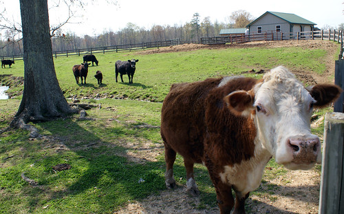 Moore or Less Farm, Bushwood