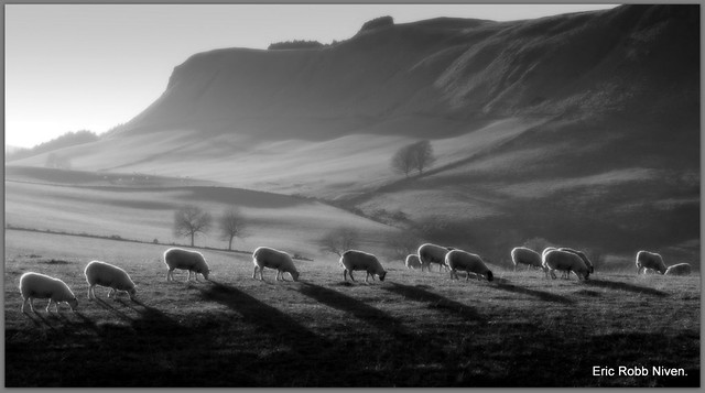 Grazing Sunshine in the Sidlaw Hills (B+W)