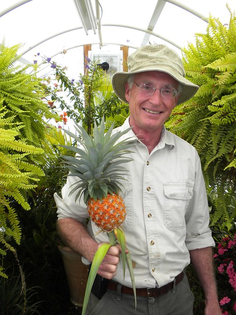 man and pineapple