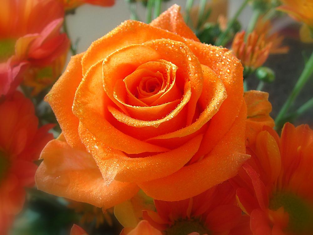 Que Bonitas Son Las Rosas Hilario Berguio Carpio Flickr