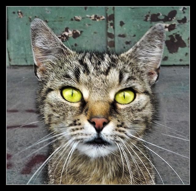 Miau! - Meow! 04