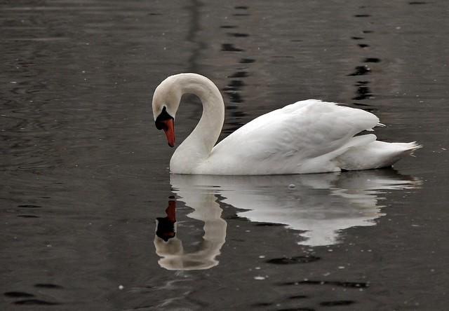 Reflecting~