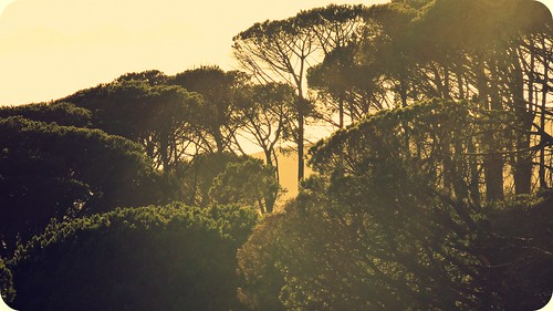 trees light nature sunshine forest sunrise capetown