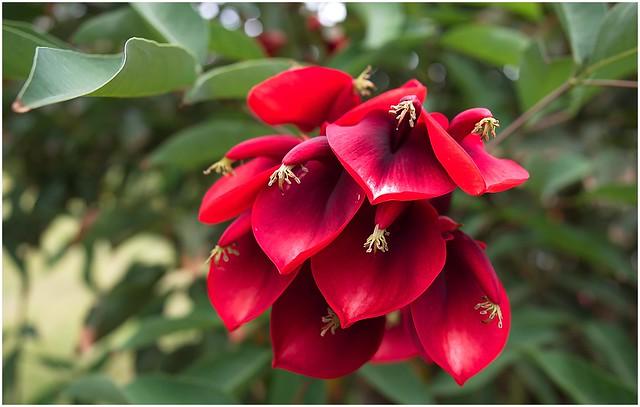 Bloomy Madeira