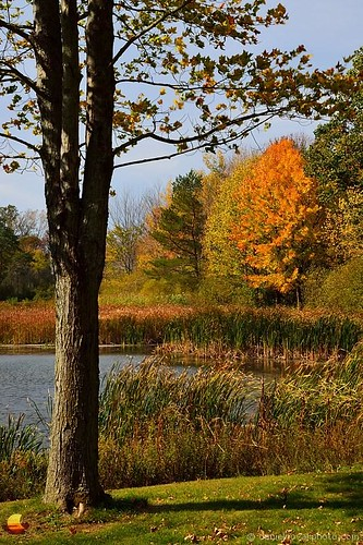 autumn fall nature water outdoors pond buffalo colorful sunny birdsong orchardpark etbtsy