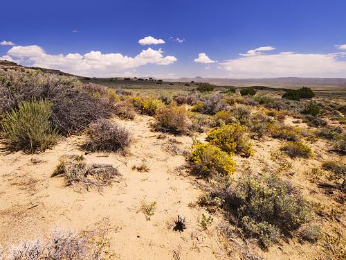 county flowers hot high sand desert united brush sage heat bloom states wyoming elevation mesa sweetwater steppe bllom scenicsnotjustlandscapes