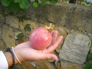 Passion Fruit V Large size Oct 12, 2015 | by toutberryfarms