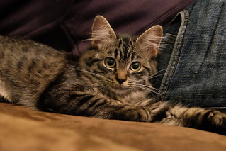 Mochi Cat 12 weeks   by sourskittled