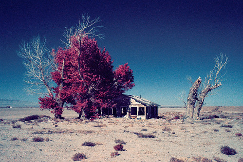 eyetwistkevinballuff eyetwist color infrared eir mojavedesert farmhouse abandoned california nikon n90s nikkor 28105mmf3545d 28105mm infracolor bw099 099 kodak ektachromecolorinfrared lenstagger ishootfilm ishootkodak film analog analogue emulsion coolscan iconla mojave desert southwest usa falsecolor landscape aerochrome 35mm antelopevalley av ruins derelict decay dead dustbowl windblown farm joads grapesofwrath tree stump cottonwood house lancaster palmdale alfalfa rural
