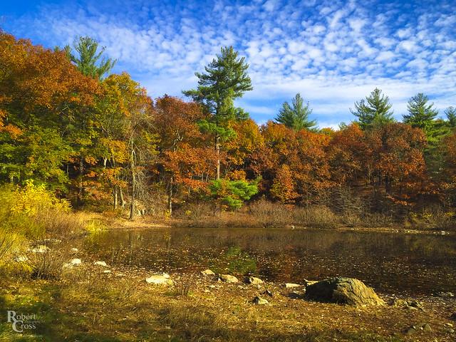 Pine Banks Autumn Color