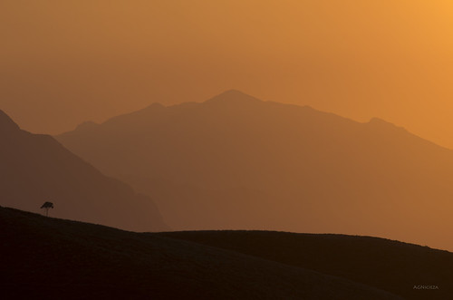 sunset tree silhouettes explore llanes smcpentaxda300mmf40edifsdm pentaxk5
