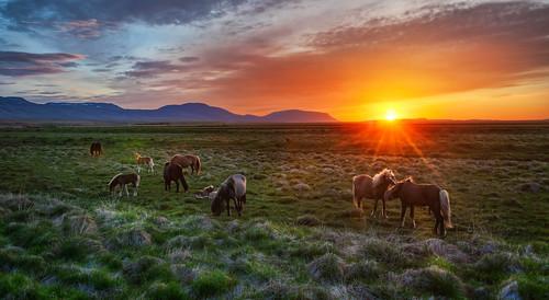 Tableau Vivant Of Wild Horses | by Trey Ratcliff