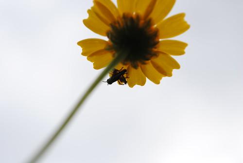 naturaleza primavera contraluz nikon flor galicia amarillo contrapicado insecto