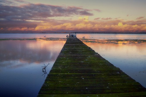 sunset lake pelicans dusk jetty wharf tuggerah mygearandme mygearandmepremium mygearandmebronze mygearandmesilver mygearandmegold mygearandmeplatinum mygearandmediamond