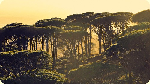 trees sun nature sunshine sunrise southafrica capetown hcs happyclichésaturday
