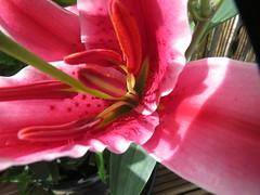 Garden 2012-08-26