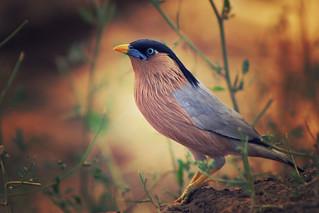 Bird 2   by VikramDeep