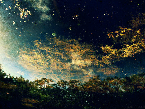 sky abstract nature water reflex pond upsidedown galaxy abstraction algae galactic naturalabstract