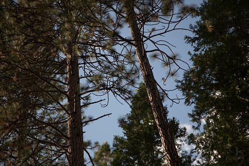 california camping mountains nature unitedstates yosemite
