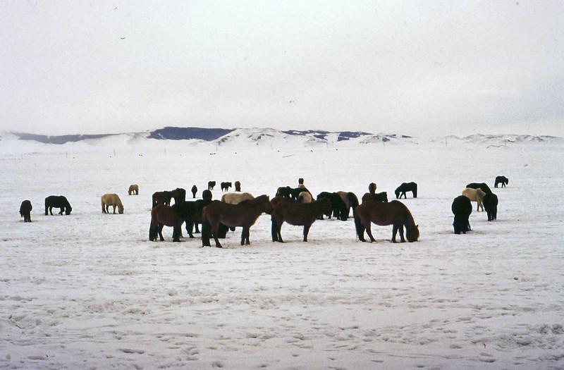 MONGOLIA 1994 01-0014